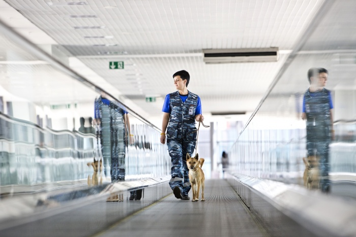 Aeroflot takes canine security to next level