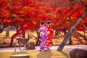 The best time of the year to visit Japan