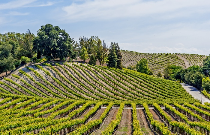Paso-Robles-winery-700x452.jpg