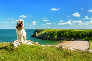 The top 5 UK holiday destinations to visit with dogs