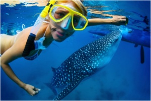 The Top 5 Australian Marine Creature Experiences