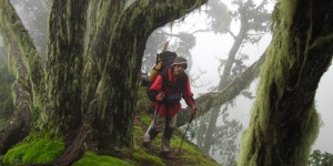 You want to climb the Rwenzori Mountains?