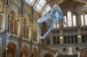 Sports betting Hall of Fame to induct 5 new members at Natural History Museum
