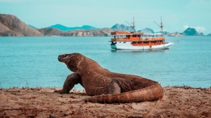 What you need to know before taking on a Komodo sailing trip