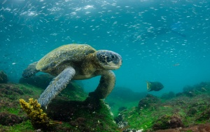 What you need to know before heading to the Galapagos
