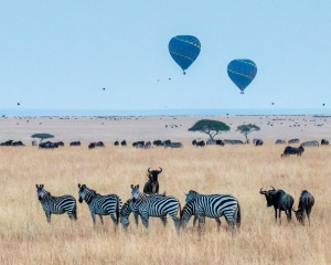 Kenya wildlife safari guide - The top 5 destinations to game drives