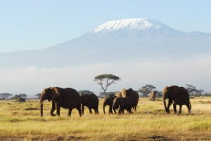 Tanzania - A Country That Simply Cannot Be Missed