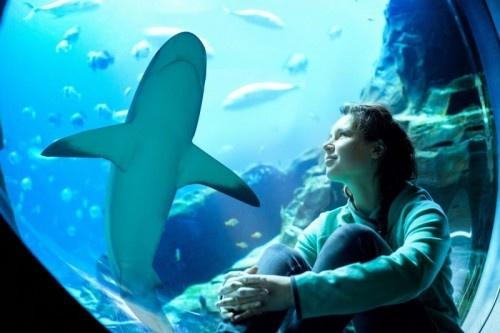 Atlantis, Dubai prepares for Shark Week