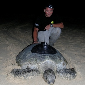 Jumeirah Supports Sea Turtle Satellite Tagging in Indonesia