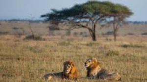 Sustainable tourism central to the future of Africa's parks