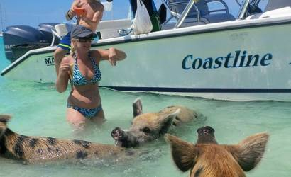 Breaking Travel News investigates: Swimming with pigs in the Bahamas