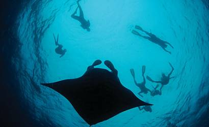Season of Manta Rays at Four Seasons Resort Maldives