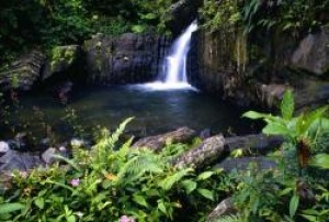 Puerto Rico's El Yunque National Forest in new Seven Wonders campaign