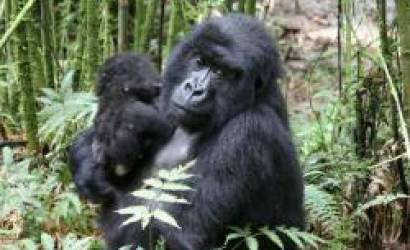ICTP President honored name new born baby gorilla in Rwanda