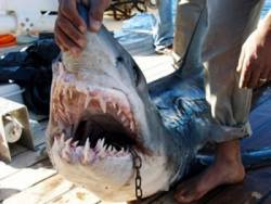 Fatal shark attack in Egypt