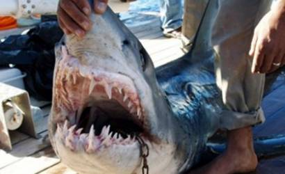 Killer shark may have damaged sensory system