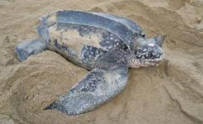 Turtle nest incident on Grande Riviere explained