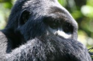 Uganda gorilla safari group promotes through .travel domain name
