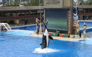 SeaWorld Entertainment to end orca breeding programme