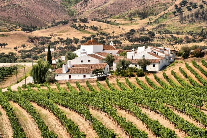 Borba Vineyard Portugal Credit CM Borba