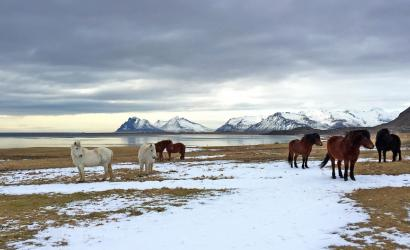 Six Senses Hotels unveils Iceland property