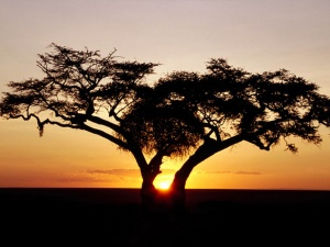 European boom drives tourism in Namibia