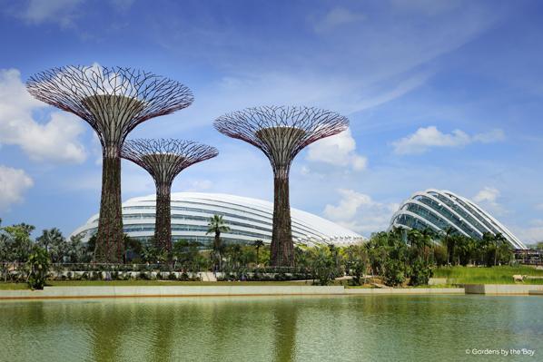 gardens by the bay transforms singapore into a garden city